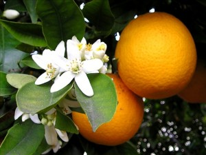 aromatherapy - remedy for acne